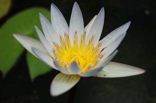蓮花藏世界海