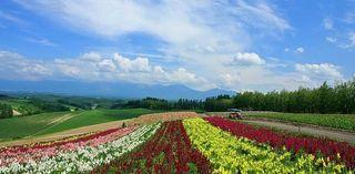 Japan-Hokkaido-Landscape-WUXGA_country_field_0655