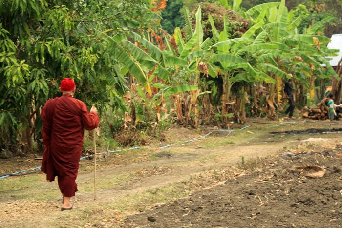 緬甸 弄曼農場 心道法師